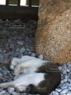猫の写真・画像素材[608387]