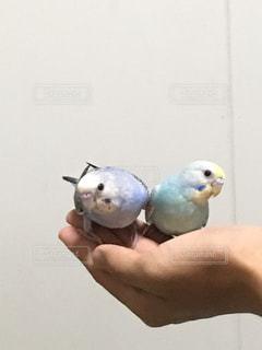 鳥 - No.622085