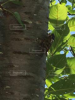木の写真・画像素材[652803]