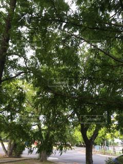 公園 - No.654721