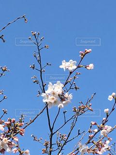 春の写真・画像素材[1087262]