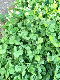 緑の植物2018の写真・画像素材[1087264]