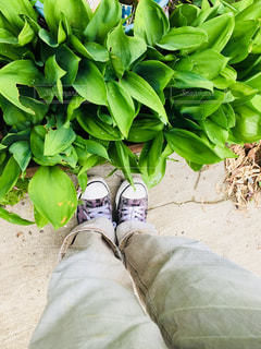 庭の写真・画像素材[1234512]