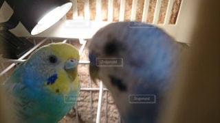 オウムの上に座っている小さな鳥の写真・画像素材[1241714]