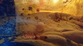 初めての産卵の写真・画像素材[1241715]
