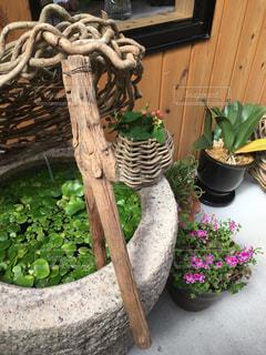 木製のまな板の上に座っているポットの植物の写真・画像素材[1277794]