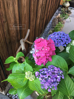 紫色の花一杯の花瓶の写真・画像素材[1277799]