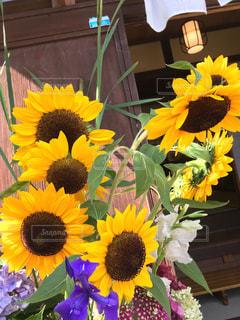 近くに黄色い花のアップの写真・画像素材[1277801]