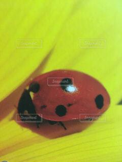 赤の写真・画像素材[1519316]