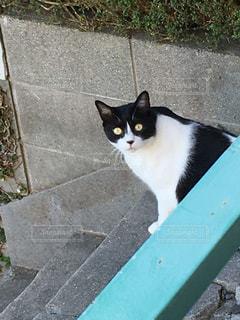 棚の上に座って黒い猫の写真・画像素材[1556266]