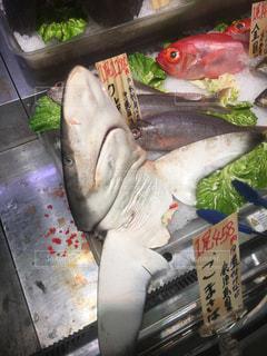 サメの写真・画像素材[524260]
