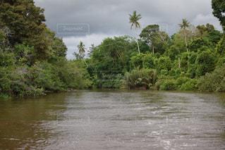 川の写真・画像素材[528617]