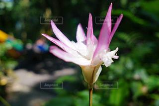 花の写真・画像素材[851261]