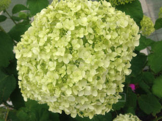 花の写真・画像素材[537598]