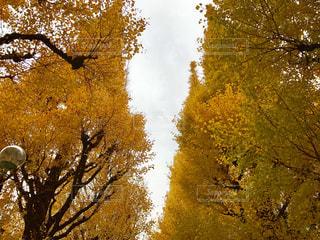 フォレスト内のツリーの写真・画像素材[901961]