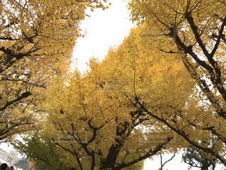 フォレスト内のツリーの写真・画像素材[901962]
