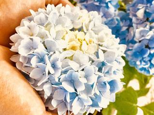 近くの花のアップの写真・画像素材[1305776]