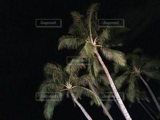 木の枝の上に蜘蛛の写真・画像素材[1533248]