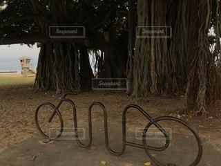 木にもたれて自転車の写真・画像素材[1533277]