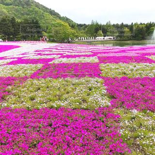 緑豊かな野原にピンクの花が立っているの写真・画像素材[2138405]