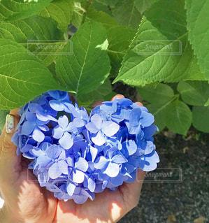 植物のクローズアップの写真・画像素材[2224557]