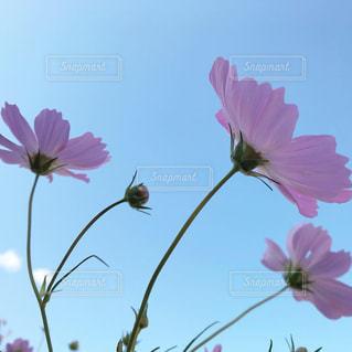 花をクローズアップするの写真・画像素材[2695190]