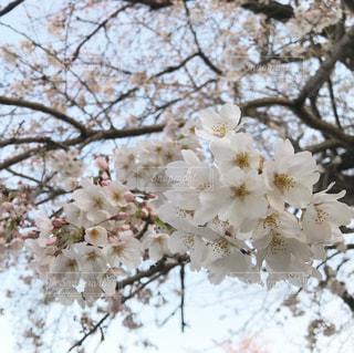 花のクローズアップの写真・画像素材[3060860]