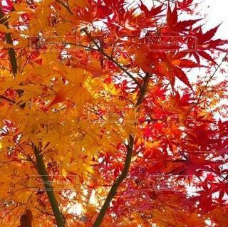 木のクローズアップの写真・画像素材[3981096]