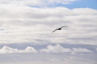 海の写真・画像素材[527632]