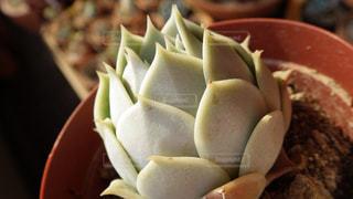 植物の写真・画像素材[524510]