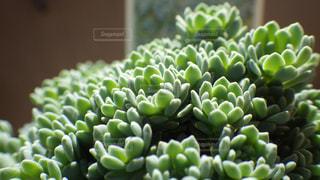 植物の写真・画像素材[525022]