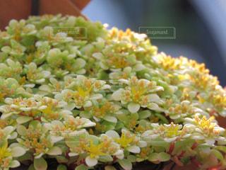 花の写真・画像素材[525023]