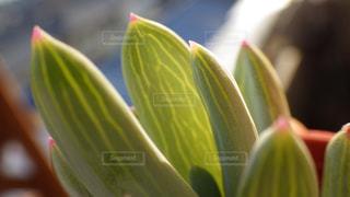 緑の写真・画像素材[525030]