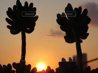 植物の写真・画像素材[525181]