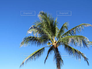 空の写真・画像素材[662666]