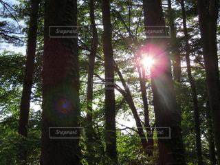 森の写真・画像素材[662794]