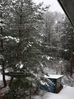 雪の写真・画像素材[524733]
