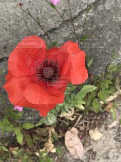 花の写真・画像素材[524746]