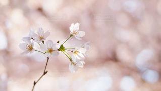 春 - No.531165