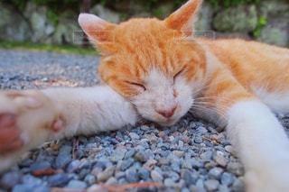 猫 - No.536054