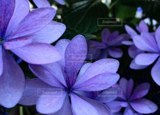 花の写真・画像素材[524950]