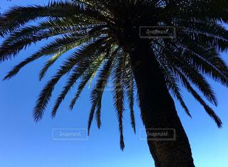 植物の写真・画像素材[524972]