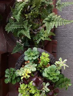 植物の写真・画像素材[525005]