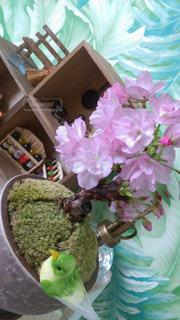 桜の写真・画像素材[525189]