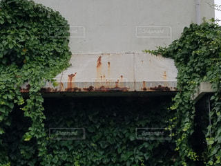 自然の写真・画像素材[533571]