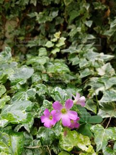 花の写真・画像素材[544102]