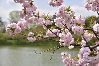 春らしくピンクの装いで。の写真・画像素材[1142815]