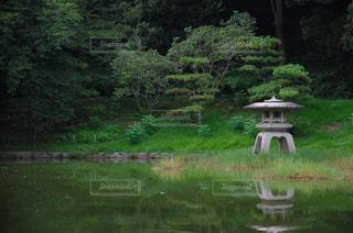 緑の芝生と木々 に囲まれた池の写真・画像素材[1142861]