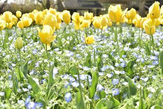 黄色の花の束の写真・画像素材[1164971]