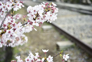 風景の写真・画像素材[2010682]